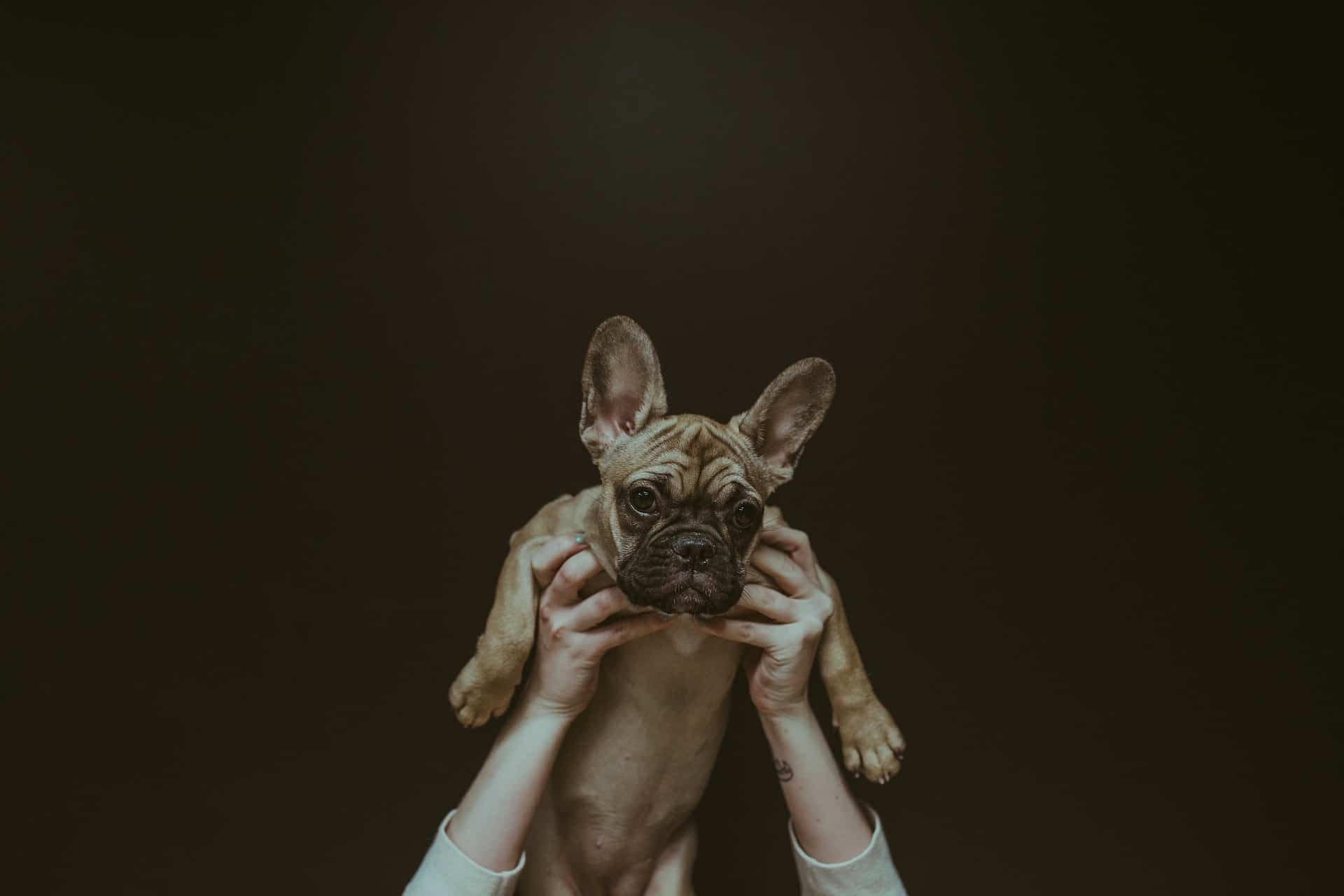 Person holding up a dog above their head