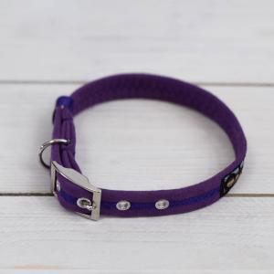 Purple Oscar and Hooch dog collar