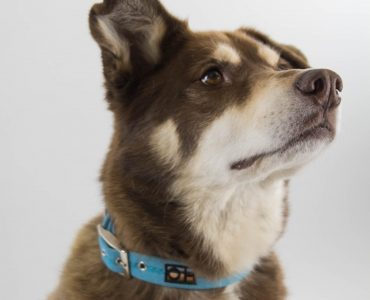 Exclusive competition for MDD supporters - design your own collar & lead set