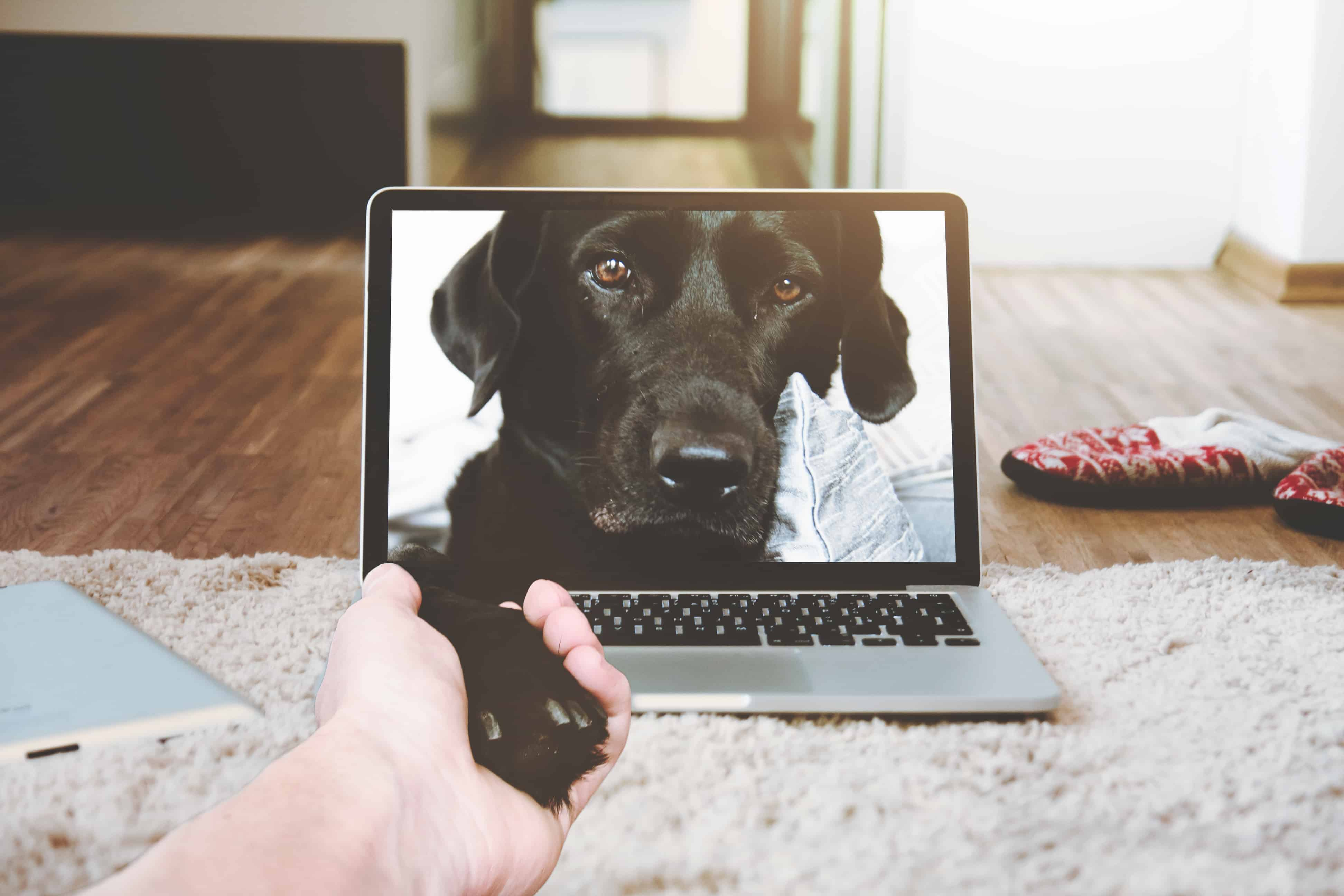 A dog's face on a laptop