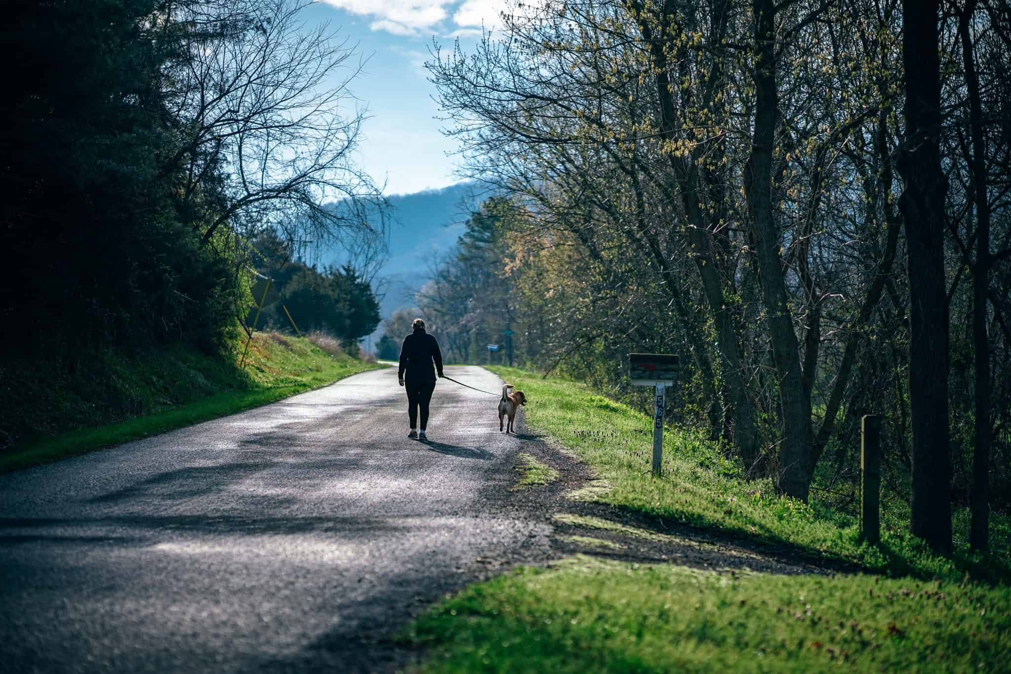 Dog on a walk in the countryside with trees