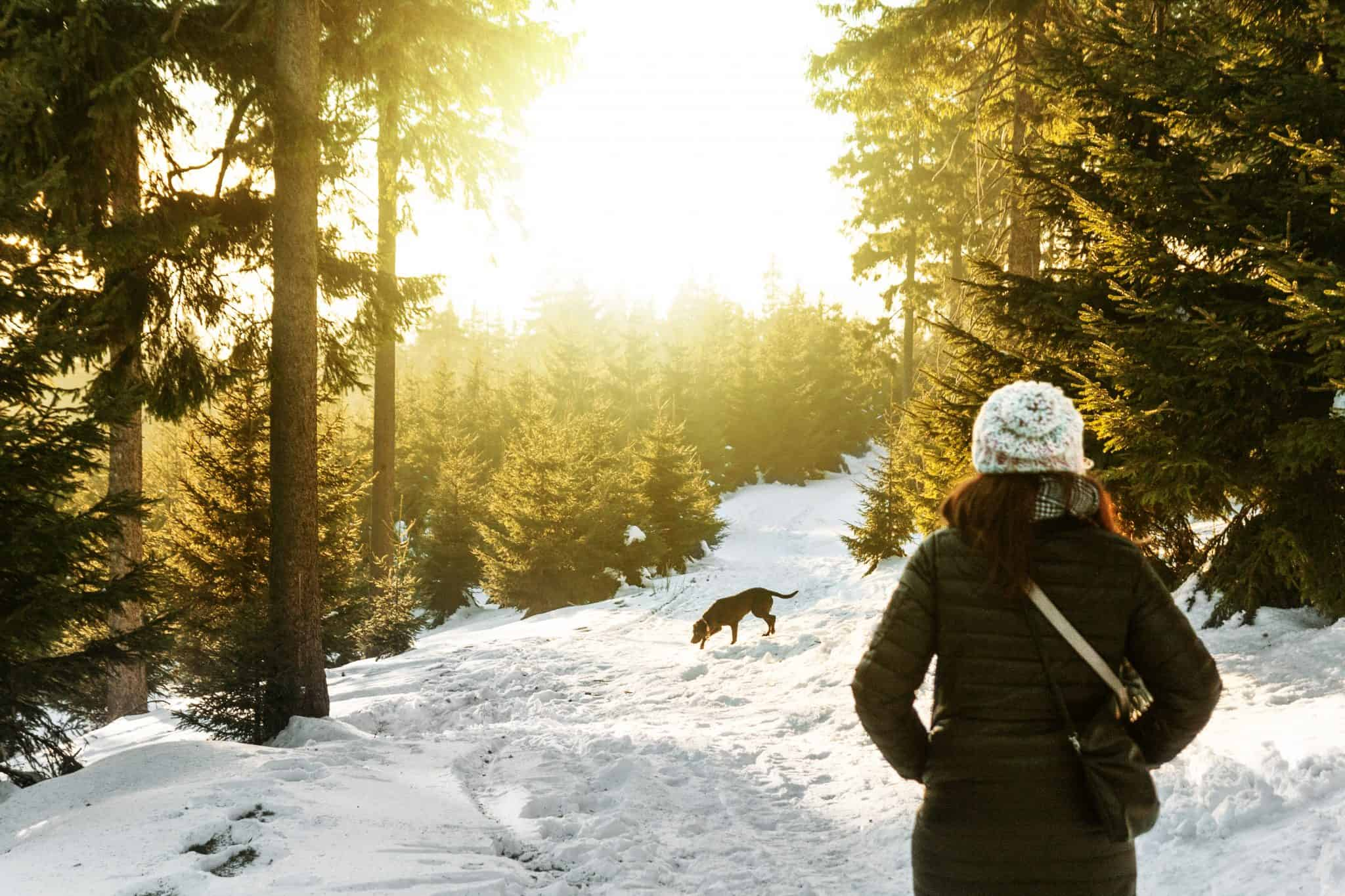 Woman and dog walking through a snowy forest
