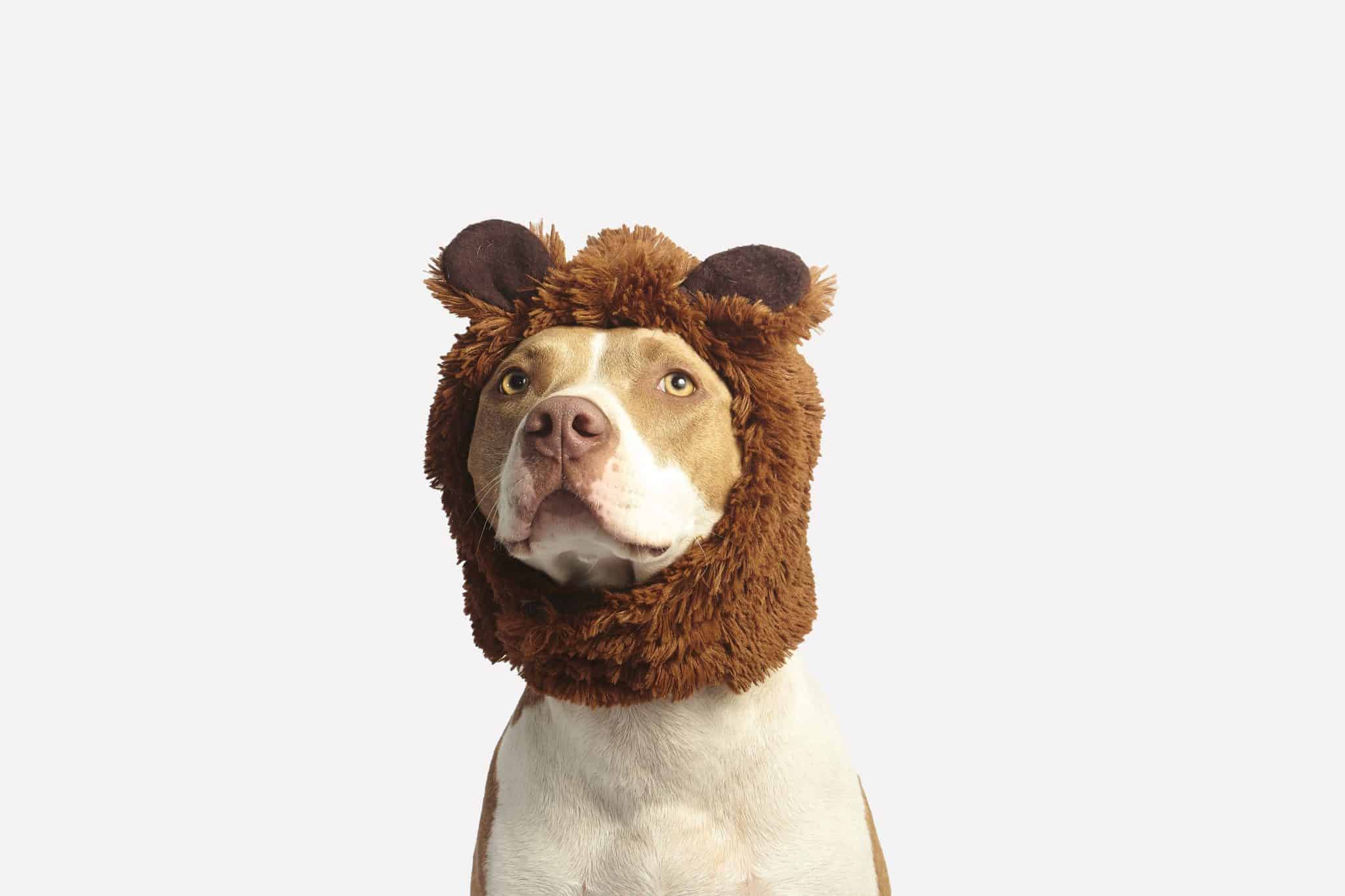 Dog in a bear hat