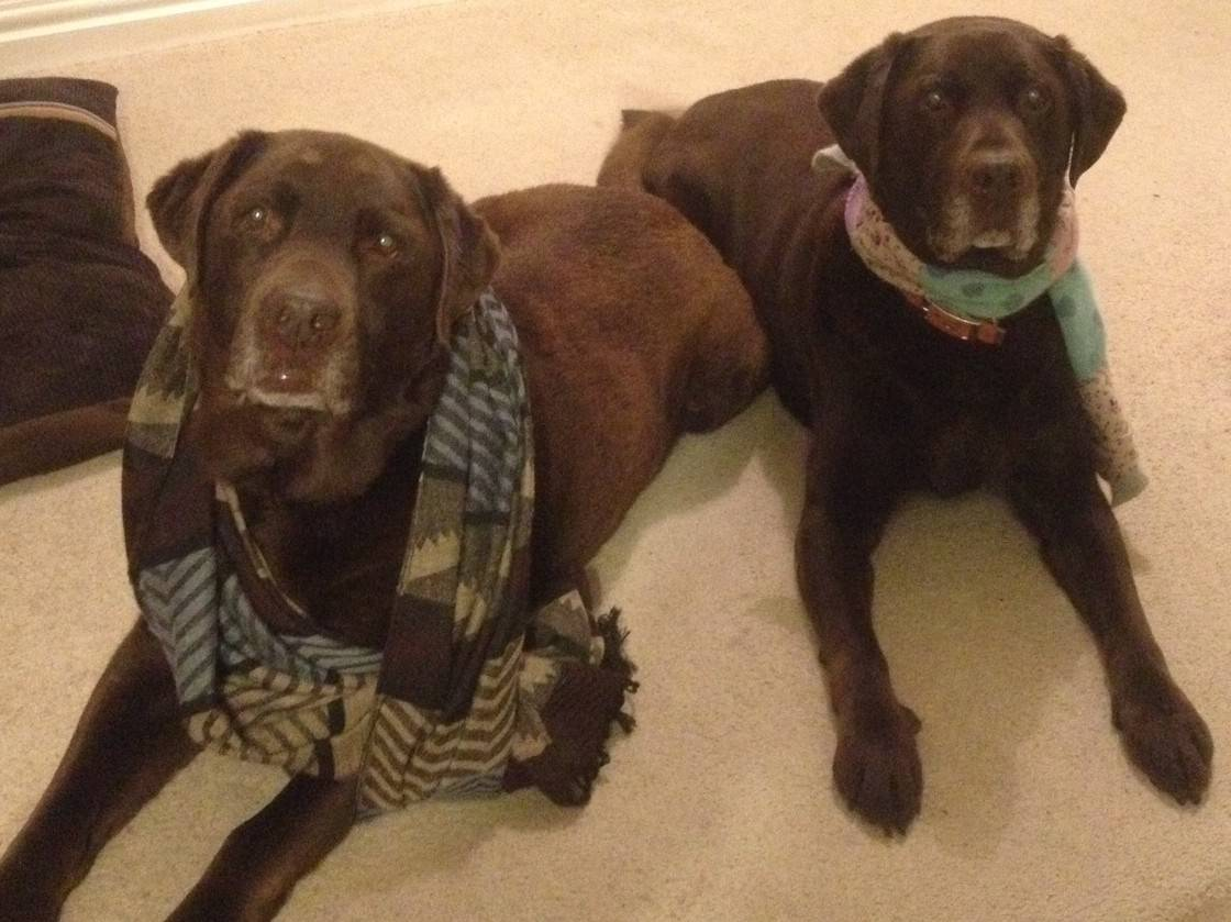 Oscar and Hooch dress up in scarves