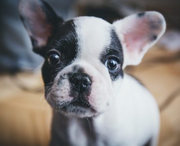 Can you buy vegan dog collars?