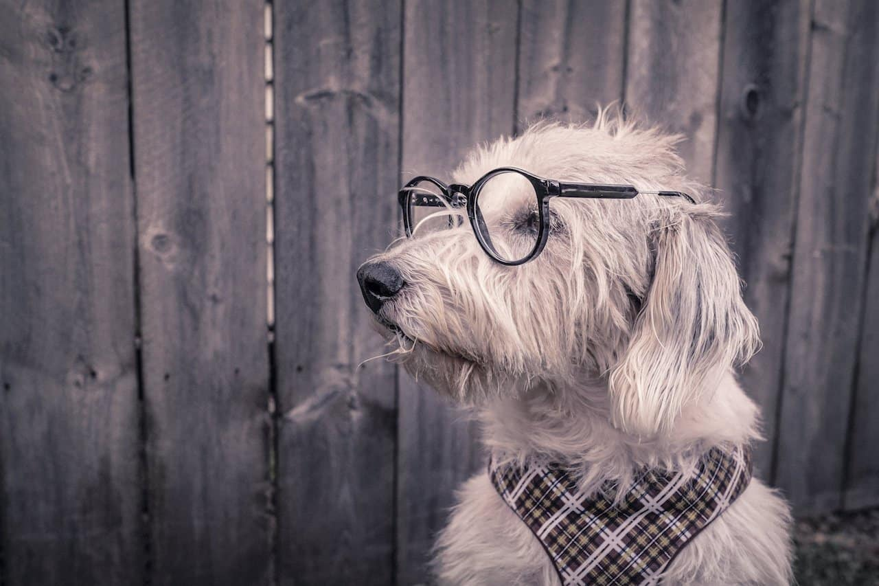 Dog wearing glasses and bandanna