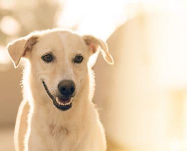 Should I Brush My Dog's Teeth?