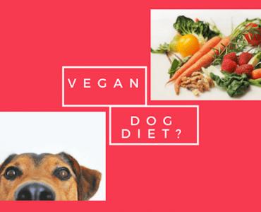 Can my dog be vegan or vegetarian?