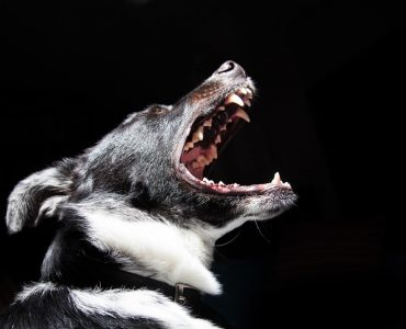 Why does my dog bark and how to reduce unwanted barking?
