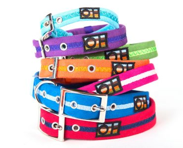 What colour dog collar? Examples of colour combinations.
