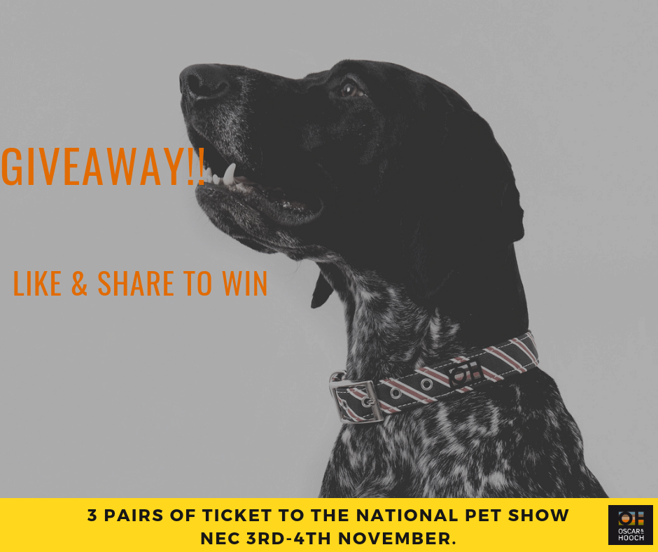 National Pet Show competition