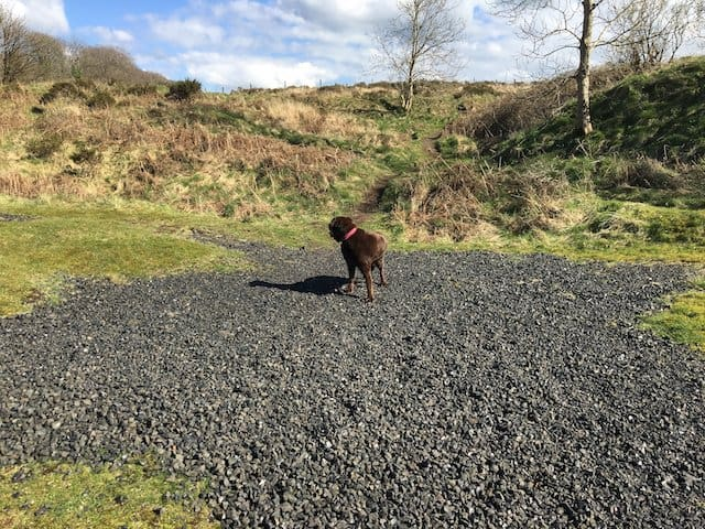 Oscar on Cheddar Gorge dog walk