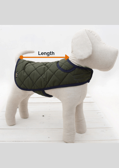 dog coat size