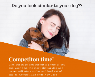 Competition - win a dog collar and lead set, do you look like your dog?