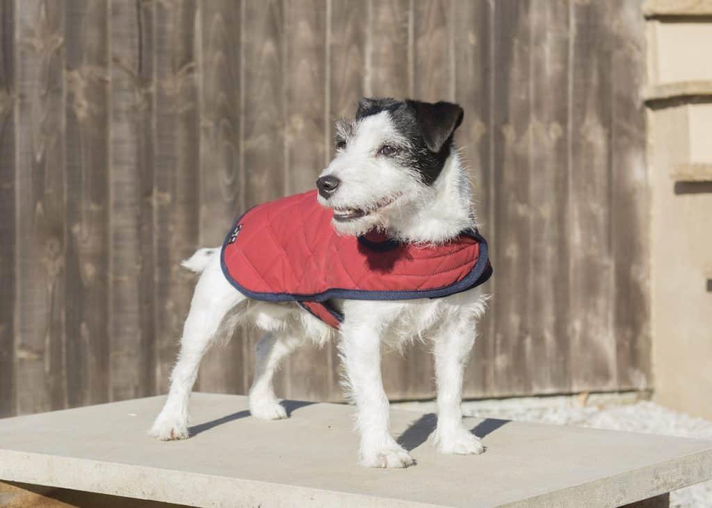 Red dog coat