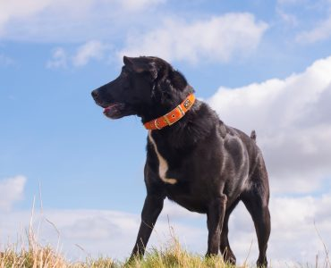 Best collars for big or large dogs?