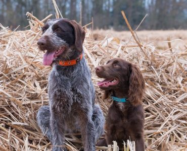 Best collars for medium sized dogs