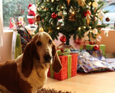 Top 9 Christmas gifts for dogs, all your dog could want...