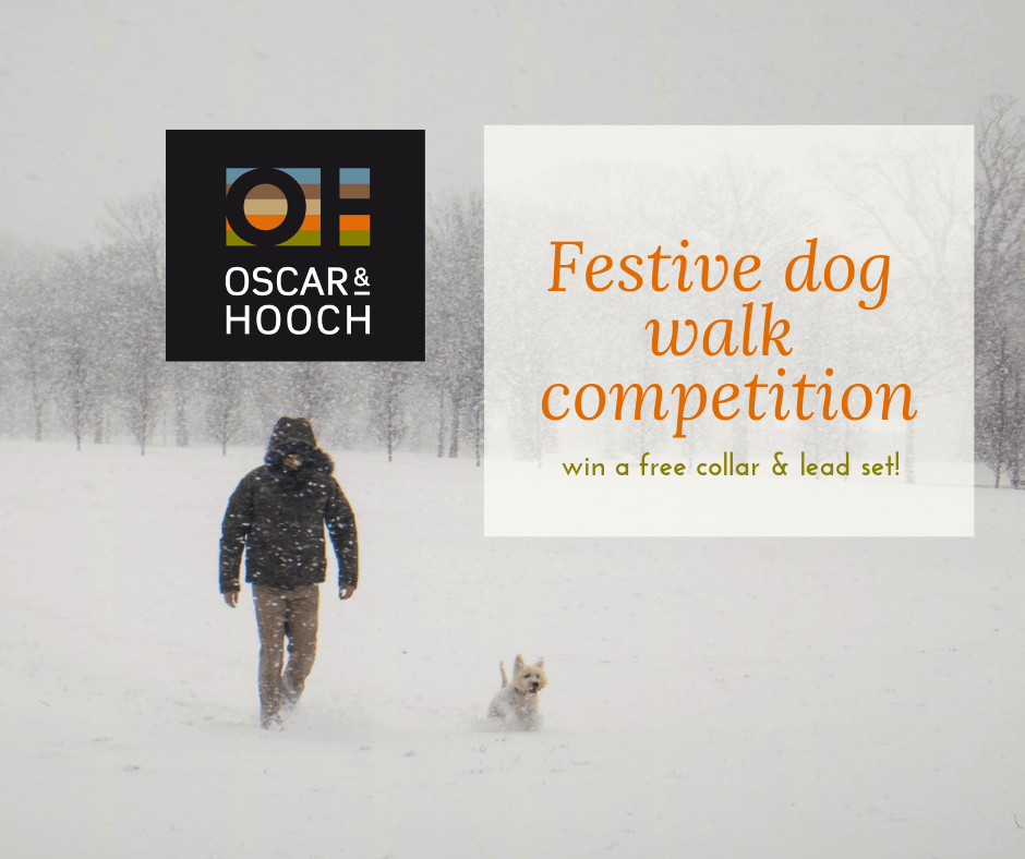 designer dog collar competition