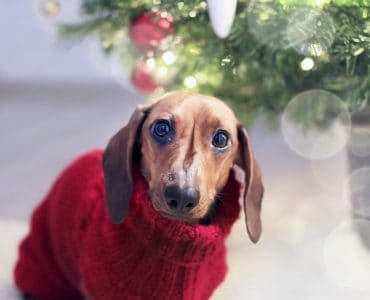 7 Ideal gifts for dog lovers