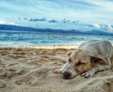Do dogs dream? And what do dogs dream about?