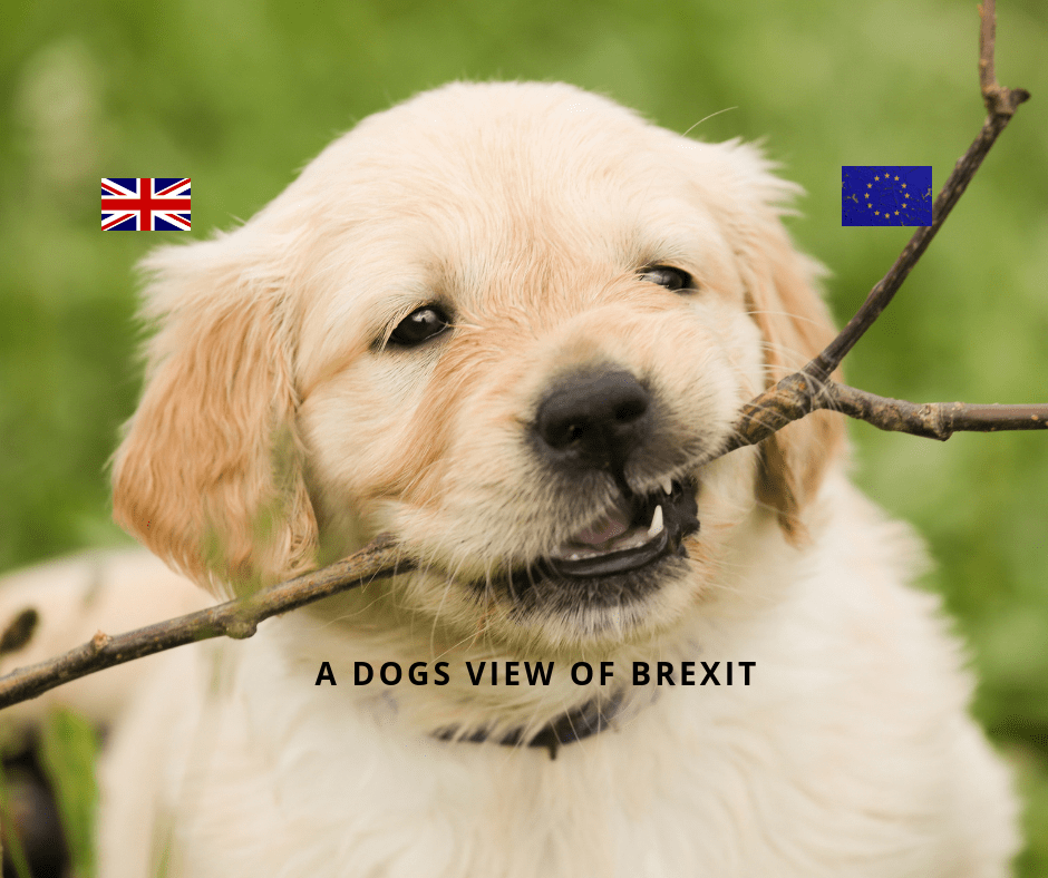 dog, Brexit