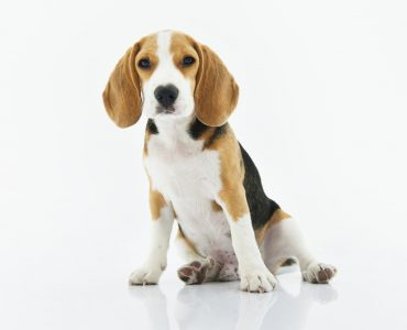 How to choose a puppy dog collar?
