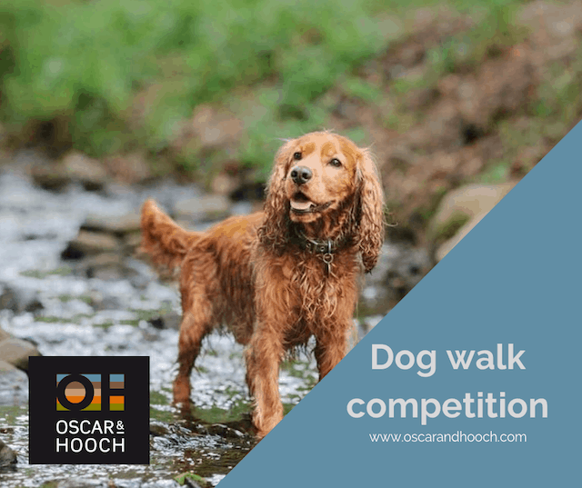 Oscar & Hooch dog walk competition