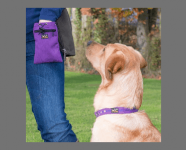 7 things to look for in a dog treat bag