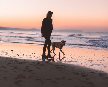 Dogs and our mental health