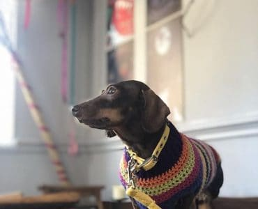 Best collars for small dogs?