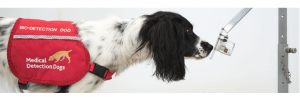 Medical Detection Dogs and COVID-19