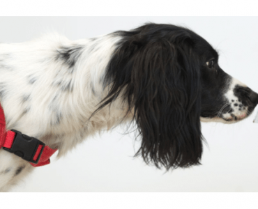 COVID Detection Dogs