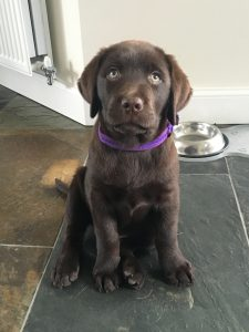Hurley as a puppy