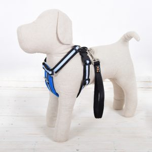 Royal Blue Dog Harness