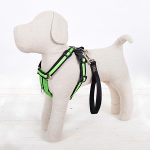 Apple Green Dog Harness
