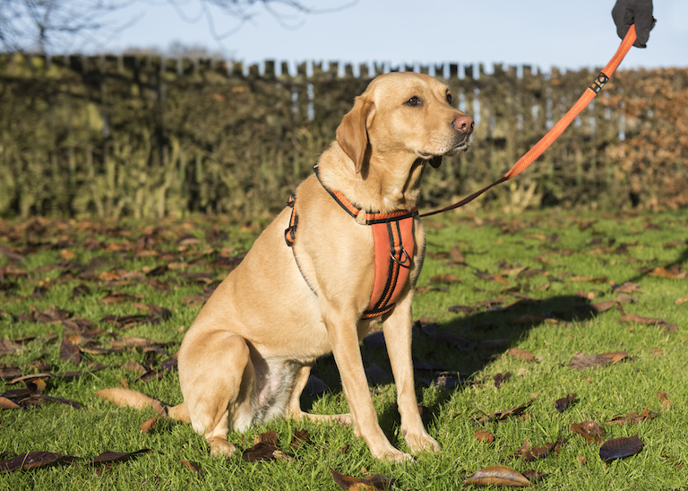 Oscar & Hooch orange harness lifestyle